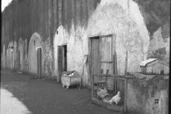 1952-baracche-porta-portese2.jpg