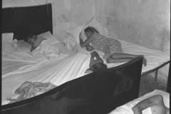 1961-interno2.jpg