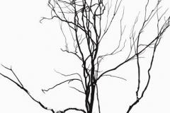 4.disegno-web.jpg