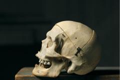 100511_skull_1918_25